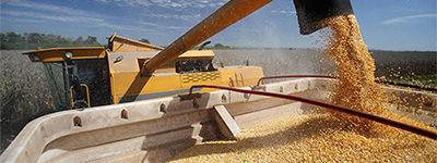 Сельское хозяйство и агропромышленность